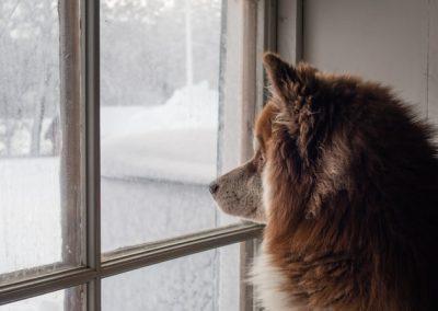 Hund i fönster - Foto av Nikola Johnny Mirkovic på Unsplash