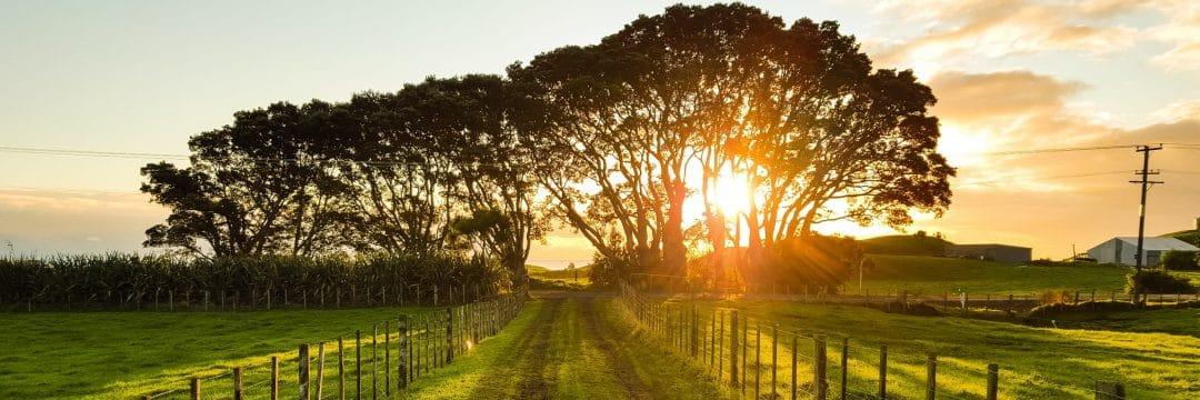 Grön solnedgång